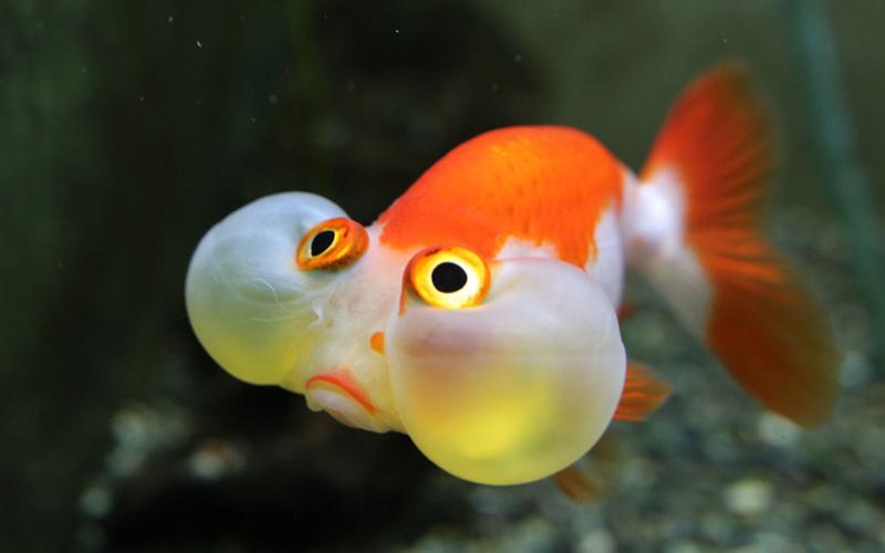 bubbleeye_img_1