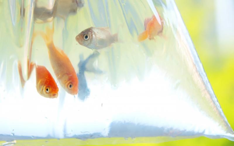 scoopfish_img_4