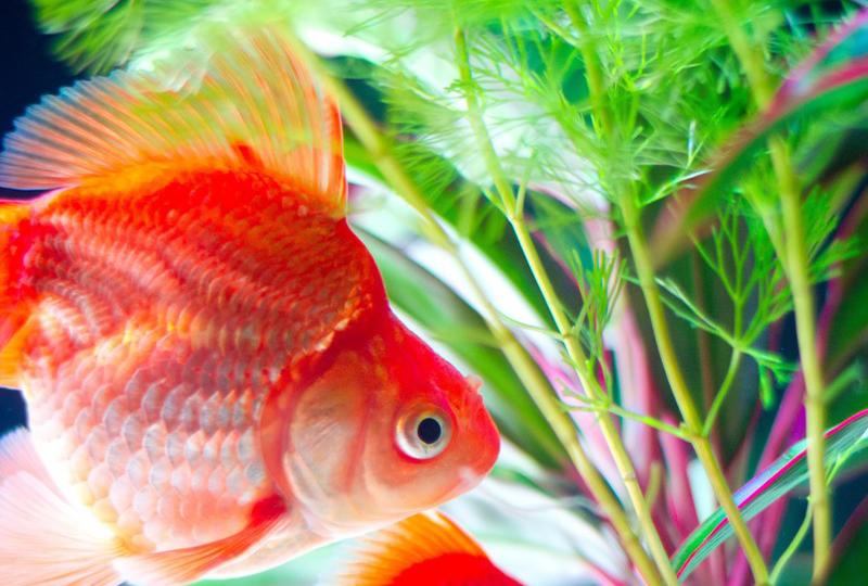 aquaticplant_img_1