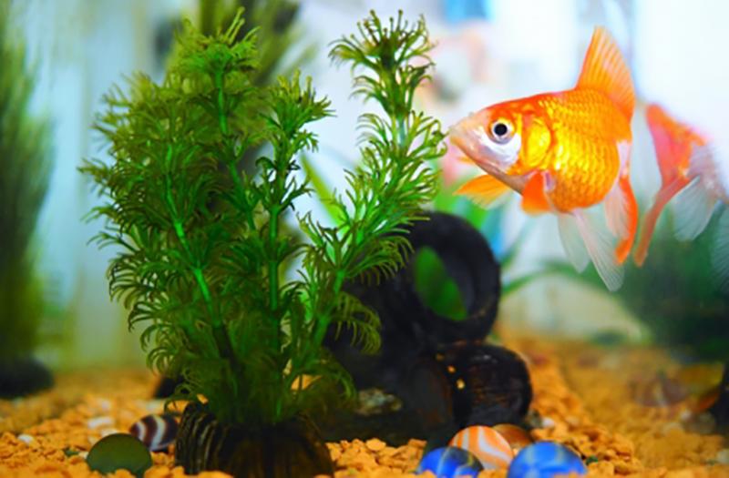 aquaticplant_img_3